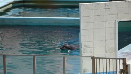 Muere un delfín tras vivir en soledad durante dos años en un acuario abandonado