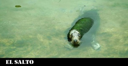 ¿Focas verdes en Santander? Exigen el cierre inmediato del minizoo de La Magdalena