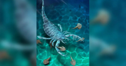 Descubren un antiguo escorpión de mar del tamaño de un perro